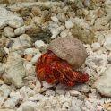 hermit crab - let's go!