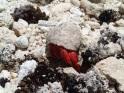 hermit crab - is it safe?