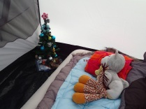 Struppi and Paule enjoying our camping Christmas tree