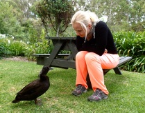 Schnatterienchen is chatting with a black duck :-)
