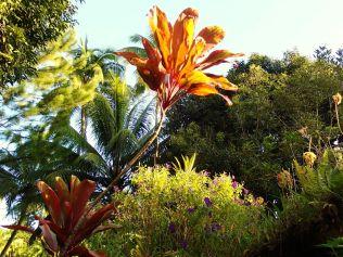 Vanira Lodge garden view