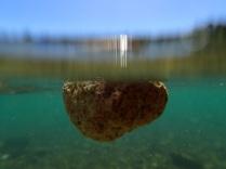 swimming stone