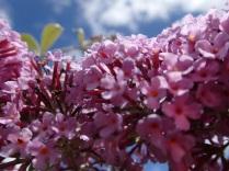 Bea flower power