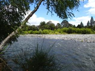 Turangi river walk