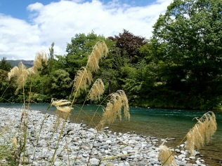 Turangi river walk