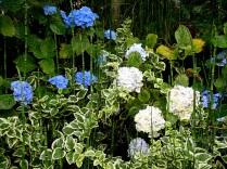 Waterworks flowers