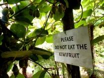 Waterworks Kiwi fruit