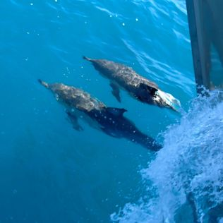 White Island tour dolphins