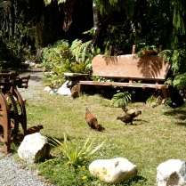 chicken are guarding the entrance to the old mine