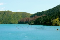mussel farm in Queen Charlotte sound