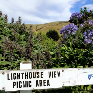 Nugget Point picnic area