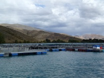 High Country Salmon Farm