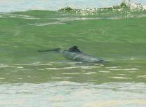 Porpoise Bay dolphins