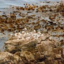 lots of seagulls