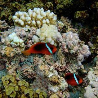 more Nemos