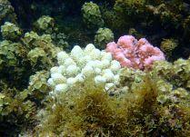 bright corals