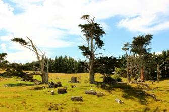 Catlins trees