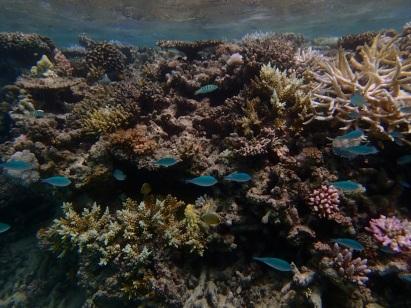 Fiji snorkelling