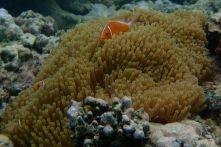 Hi Nemo!