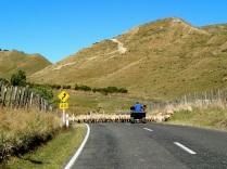 Forgotten World Highway
