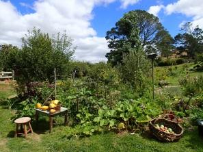 a very real veggie garden