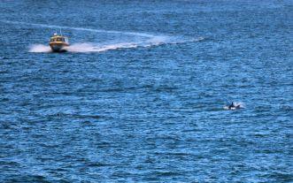 dolphin farewell
