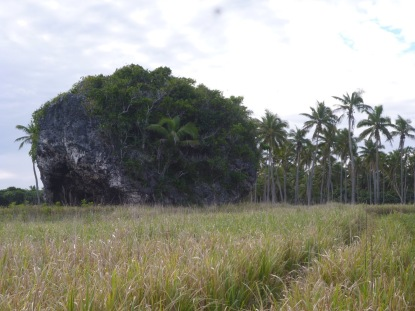 Ma'afu Kala'au Tsunami Rock … unfortunately not even a footpath across the waist high grass