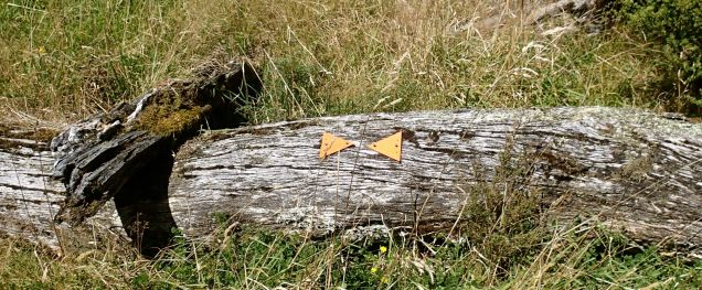 At first we were smiling at these arrows on a tree in the middle of a grassy plain ...