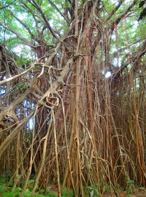 a small part of the root structure