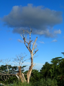 even the trees have their heads in the clouds in this beautiful resort