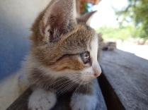 Rocky Ridge cats