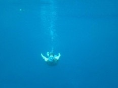 What is that thing swimming in the blue hole? Nessie?