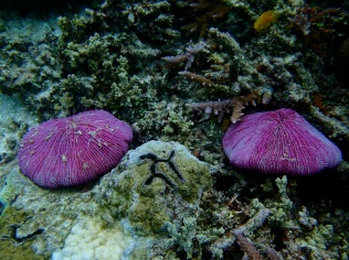 Are these corals?