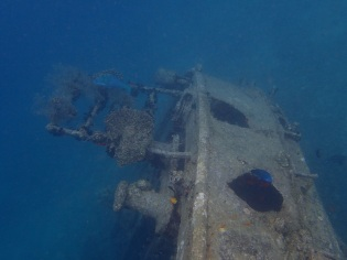 this old ship became an artificial coral for the fish