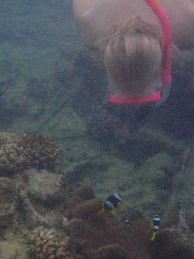 Bea vs. clown fish