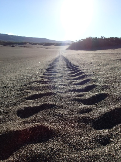 tyre tracks in the volcano ash