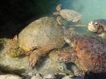 Turtle Bay Sanctuary