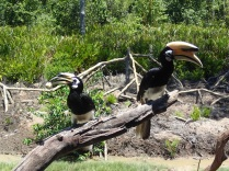 the caretakers of Labuk Bay also prepared some lunch bites for the hornbills