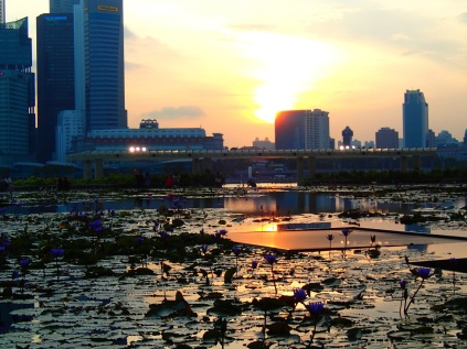 Sunset reflecting in a lotus pond in front of the Marina Sands