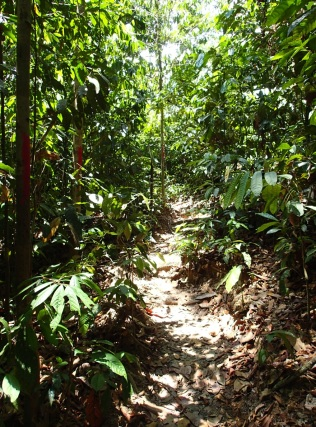 jungle walk on the bird trail …