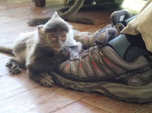 """What do you mean 'I can't have them'? But I do LOVE shoelace … PLEEAAASE?"""